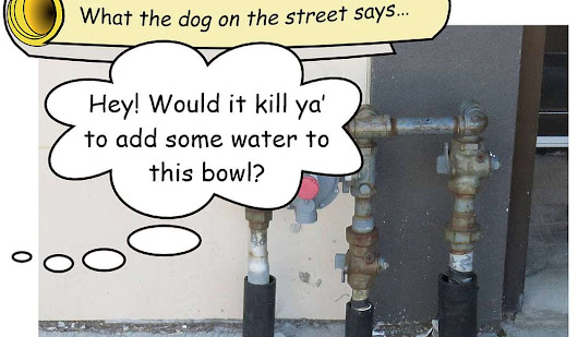 Please keep those dog bowls filled