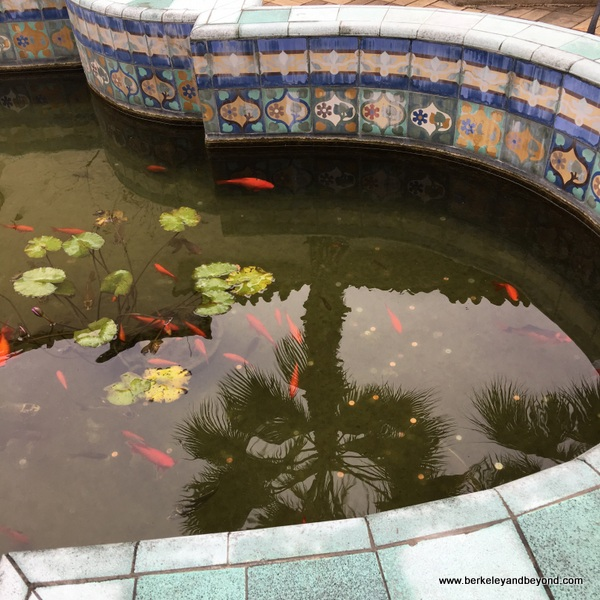 goldfish pond at McNay Art Museum in San Antonio, Texas