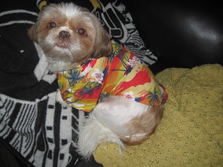 Hawaiiian shirt for dogs. Micha Doggy Wear