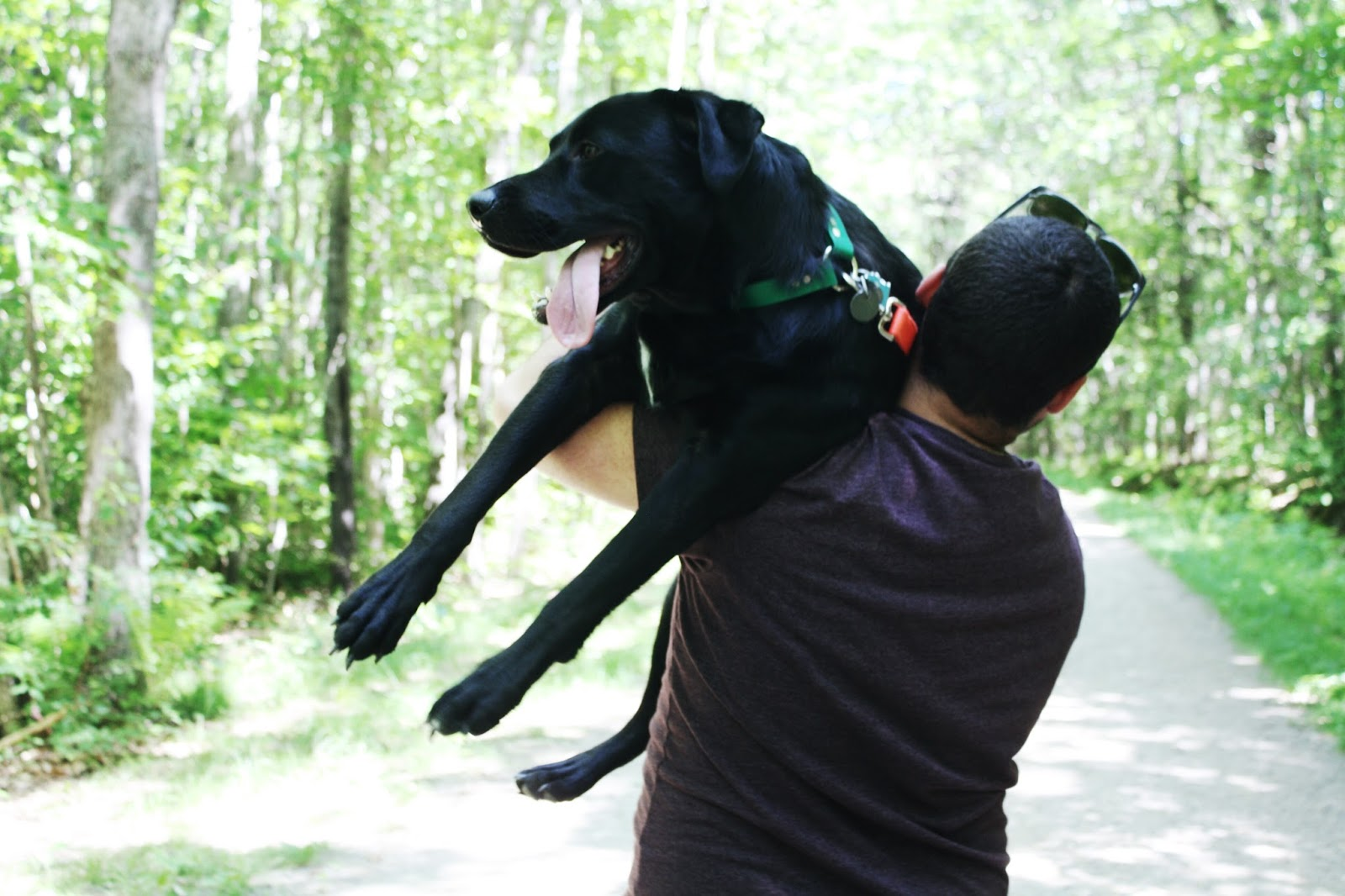 Bald Rock Mountain Trail, things to do near Camden Maine, dog friendly camden maine