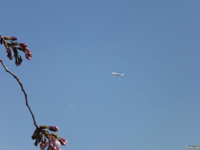 月と桜と飛行機