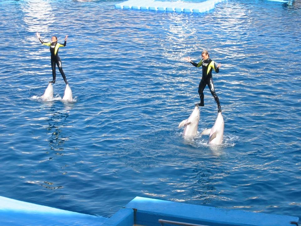 Spectacol cu delfini, Valencia