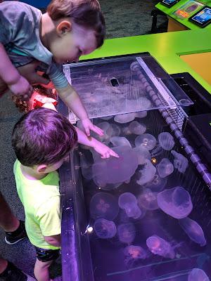 Gatlinburg, vacation, travel, family fun, to do with kids, Gatlinburg attraction, Ripley's Aquarium, Ripley's Aquarium Gatlinburg, Gatlinburg TN, Tennessee, fish, aquarium, tourist attraction, Gatlinburg with kids, jellyfish, touch a jelly fish, Aquarium touch a jellyfish, pet a jellyfish