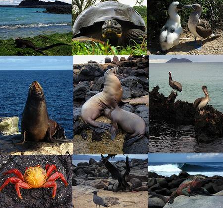fauna de Galapagos