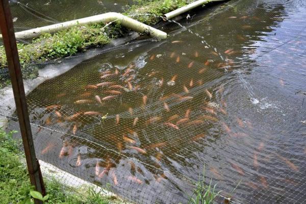 Opiniones de piscicultura for Productos para estanques de peces
