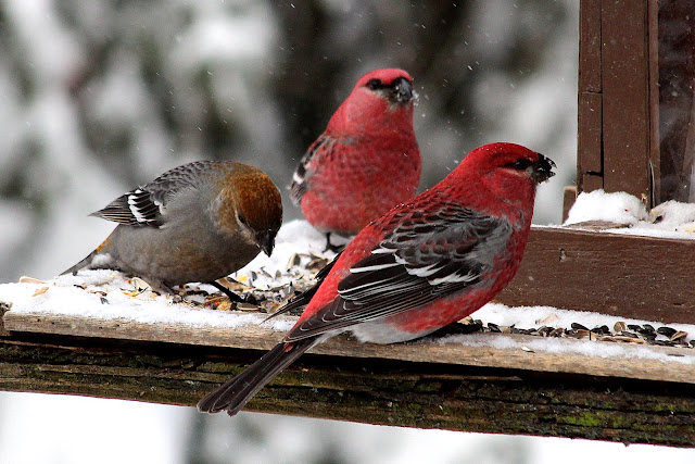 Finches at a feeder