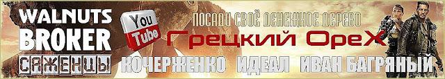 Как посадить грецкий орех Идеал, Кочерженко, Иван Багряный от Walnuts Broker