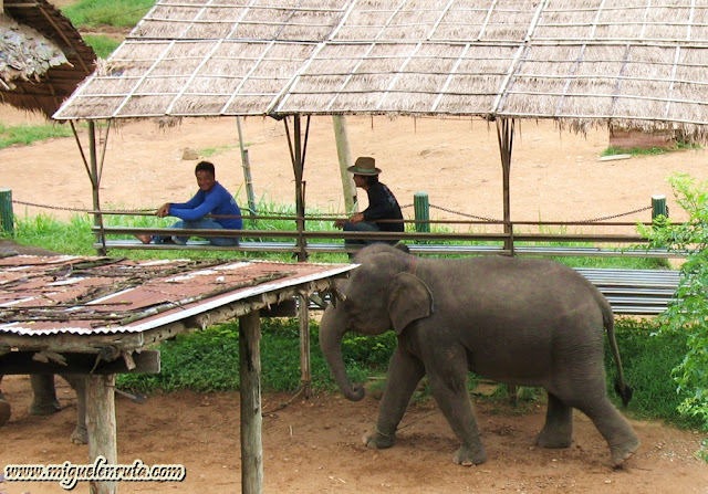Maeping Elephant Village