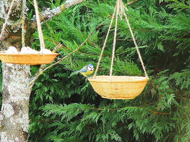 comment faire des mangeoires pour les oiseaux