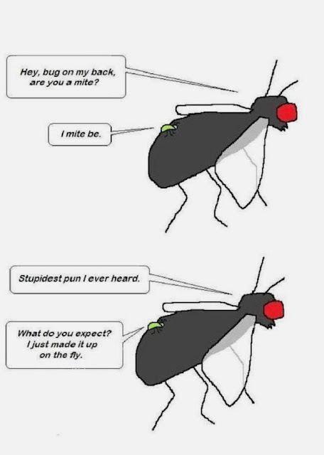 Funny Fly Mite Pun Cartoon Joke Image - Hey bug on my back are you a mite? I mite be. Stupidest pun I ever heard. What do you expect? I just made it up on the fly.