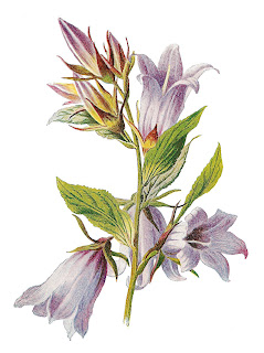flower wildflower botanical artwork image digital download transfer