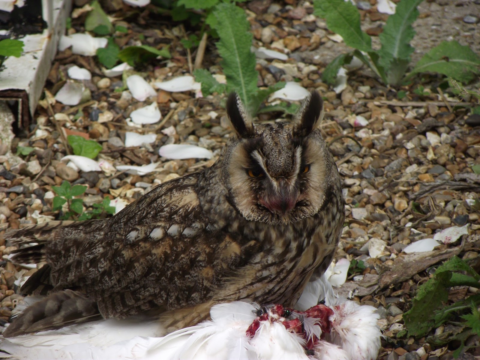 LETTERS FROM SHEPPEY: More Flowers and a Surprise Owl
