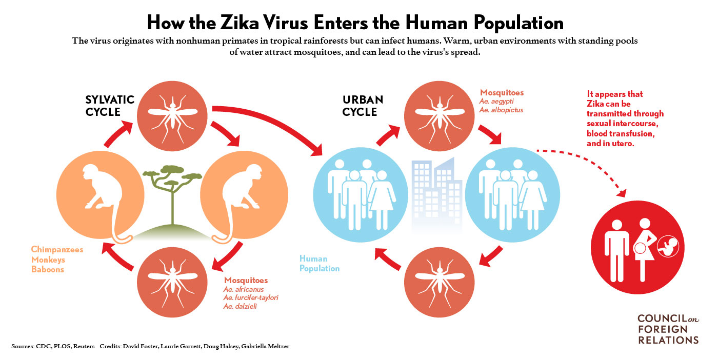 "Tropical Synapses: Weekend BioRxiv Preprint: ""Zika virus ..."