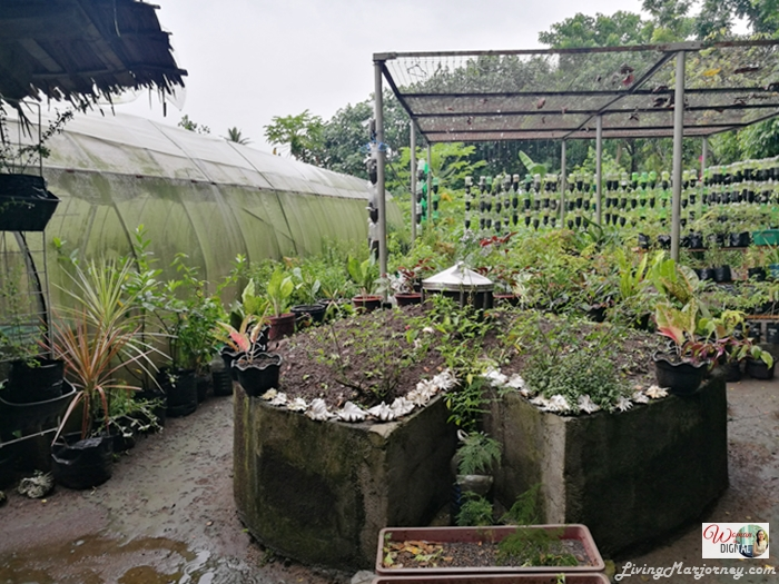 LivingMarjorney-Kawa-Kawa-Farm