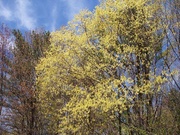 spring green three trees - photo #15