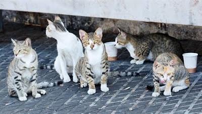 تفاصيل جديدة بواقعة «الرعب في الساحل» 20 قطة أكلت «عجوزاً» ربّاها