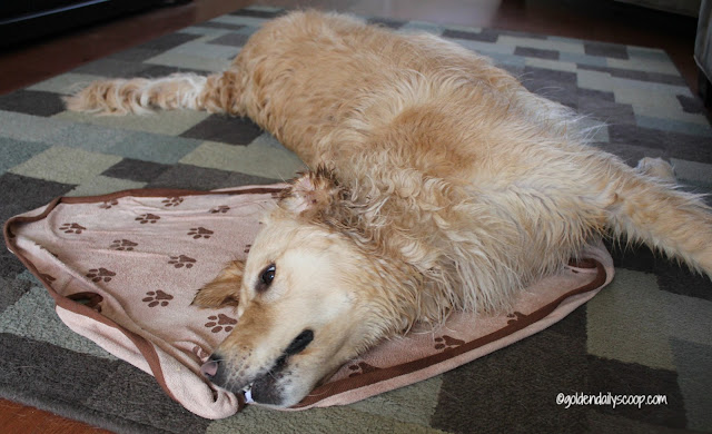 luv and emma's microfiber pet towel for dogs