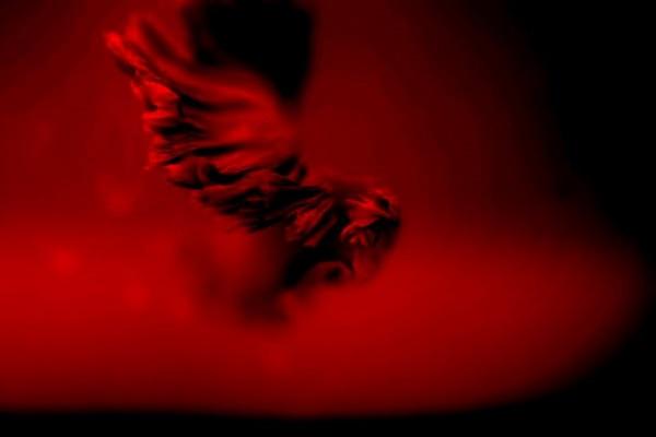 Στον έρωτα τα βλέπεις όλα κόκκινα μέχρι να τα βάψεις μαύρα