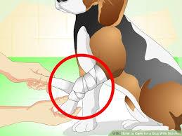lesão em cães