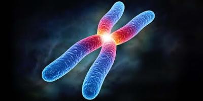 Cromosomas y biologia celular