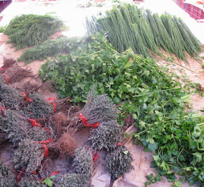 Harvesting Fresh Herbs- What You Need to Know Today