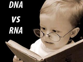 Pengertian dan Perbedaan DNA dan RNA
