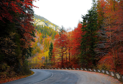 A drive during the fall season