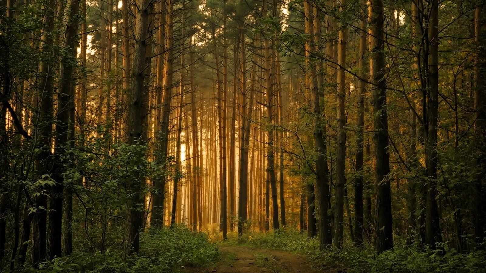 Patada De Caballo: Bosque. Forest