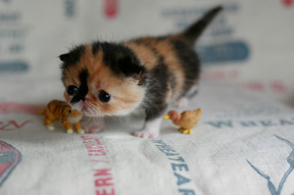 Baby Animals: Kitten 3