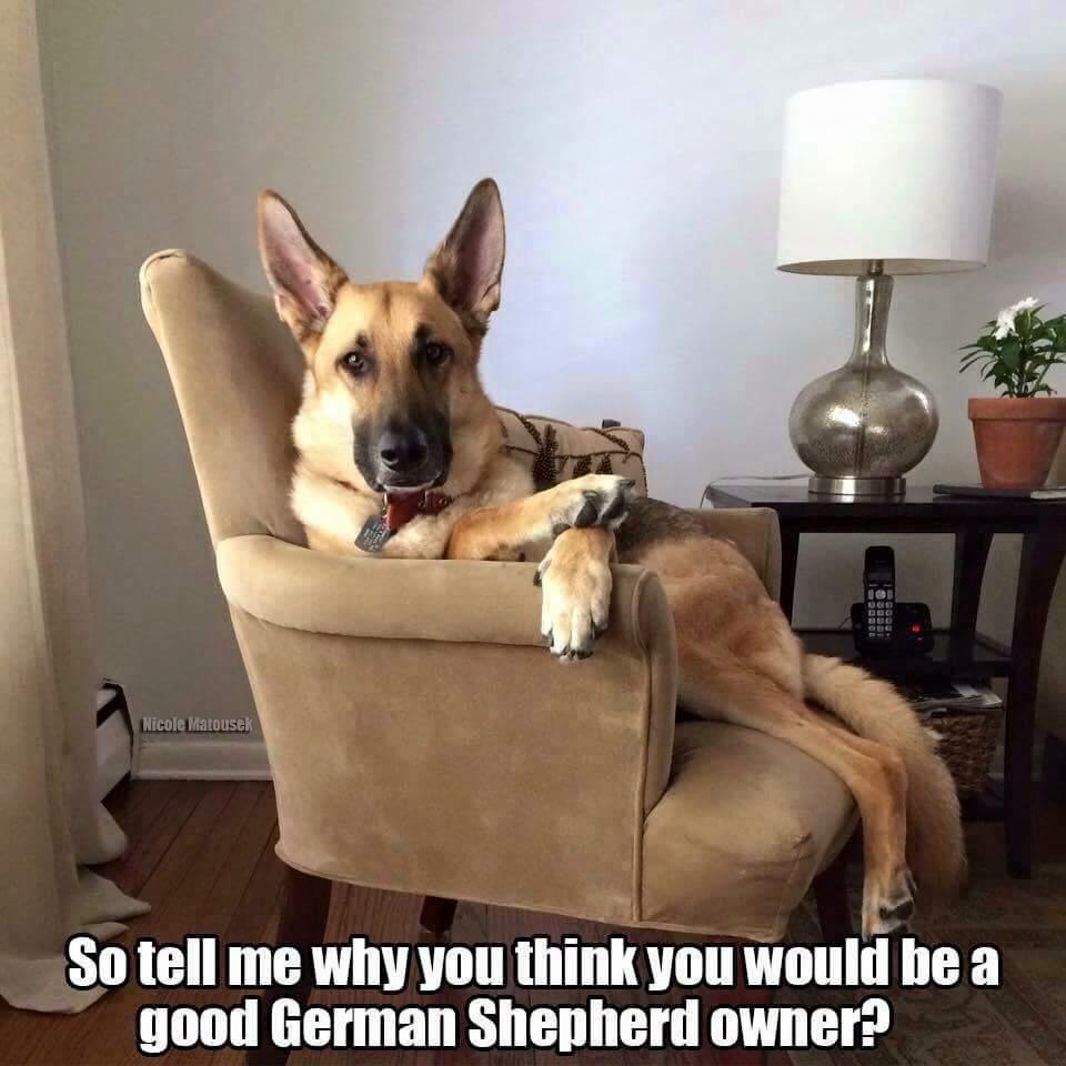 Kelley's Dog Blog: The Pet Blogger Challenge