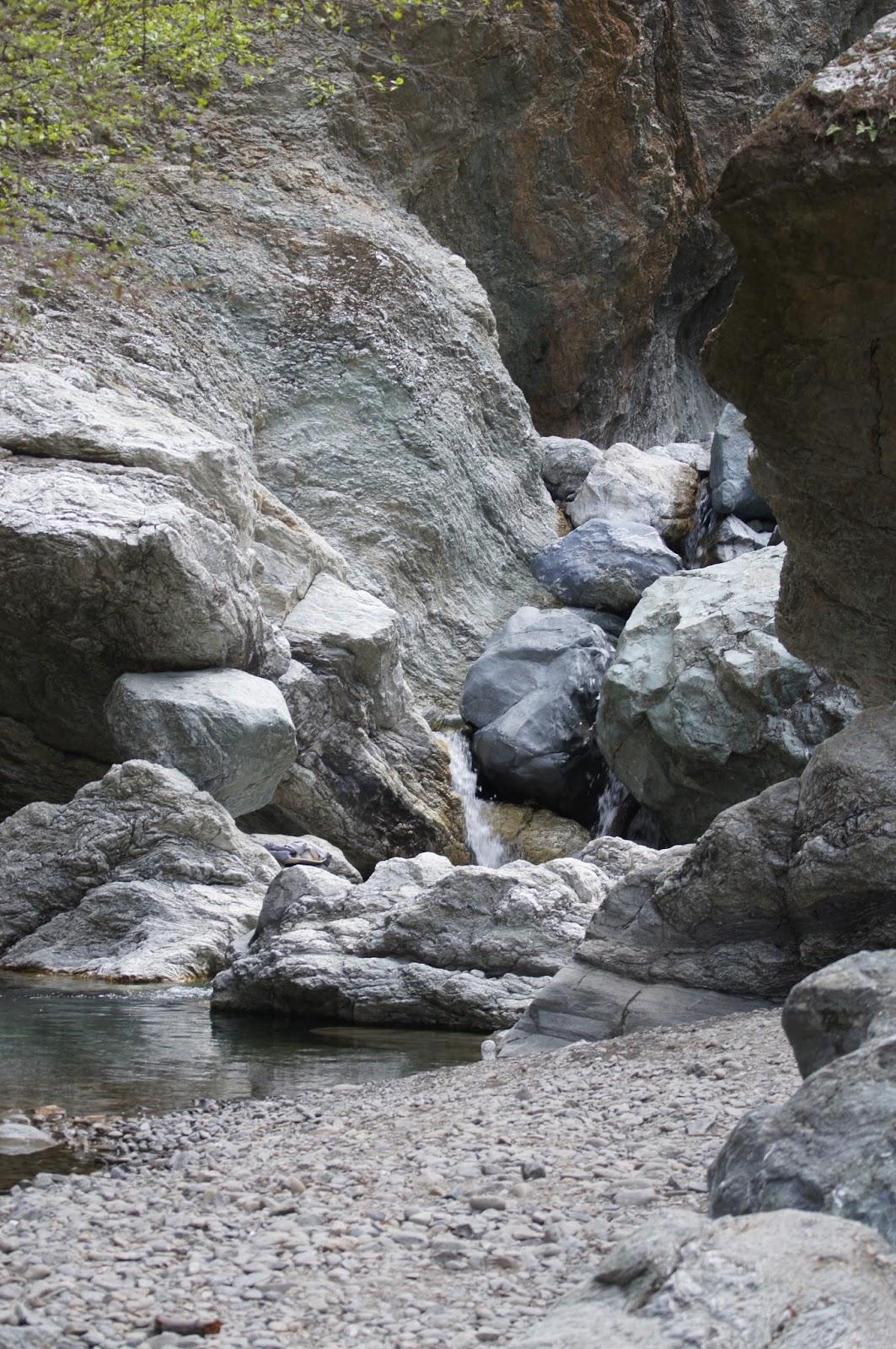 Mamma Quail Hiking California Little Yosemite At Sunol