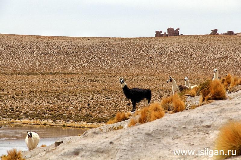 Лагуна Негра (Laguna Negra). Плато Альтиплано (Altiplano). Боливия