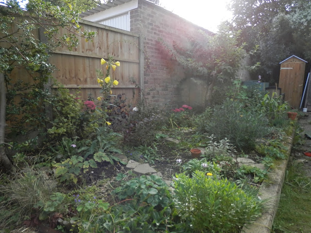 Diary of a suburban food garden, September 2016. My front garden raised bed, tiny fruit trees, and winter sowing. secondhandsusie.blogspot.com #gardening #suburbangarden #polyculture #ediblegarden