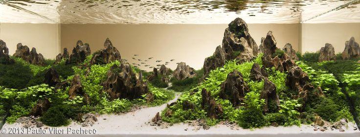 bố cục đá tiger ấn tượng trong hồ thủy sinh