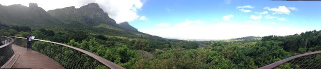 Kirstebosch, botanic garden, 360 grad view from centenary tree canopy walk