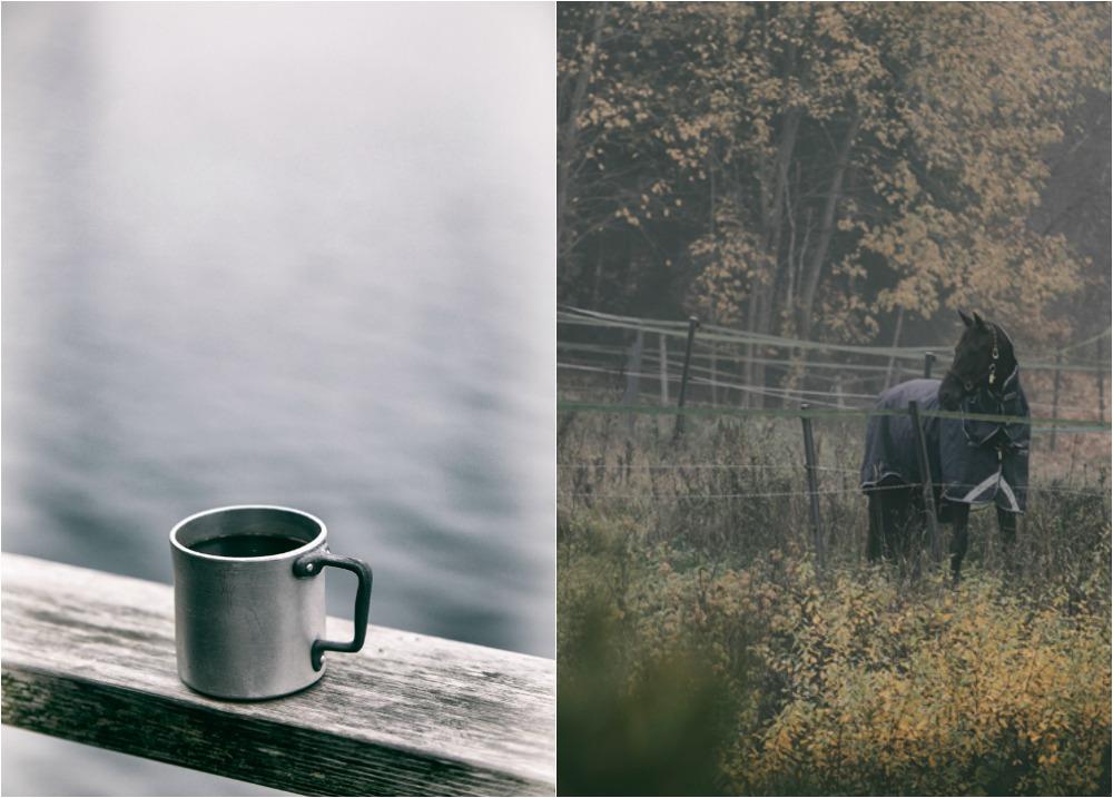 syksy, sumu, fog, usva, Finland, Suomi, Finlandphotolovers, outdoors, nature, luonto, luontovalokuva, luontovalokuvaus, Visualaddict, valokuvaaja, Frida Steiner, natural, trees, organic, kahvi, coffee, hevonen, horse