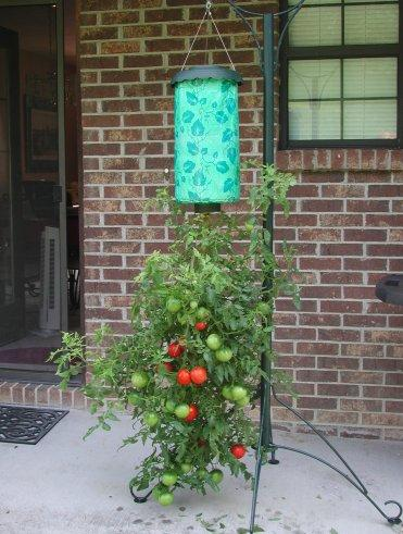 Topsy Turvy Upside-Down Tomato Planter