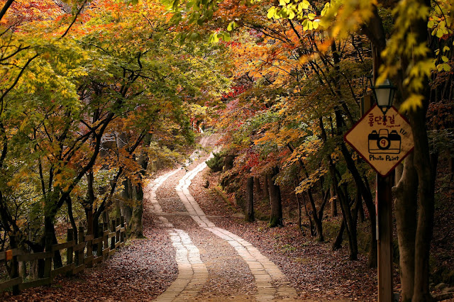 3092d75769d9f Hongdanpunggil(red leaves street) at Hillcrest is the best place to visit  when thinking of a fall ...