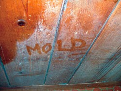 I Am Sure If You Have Seen White Mold Growing In Your House Even Its Bat First Asked Yourself Is What Dangerous