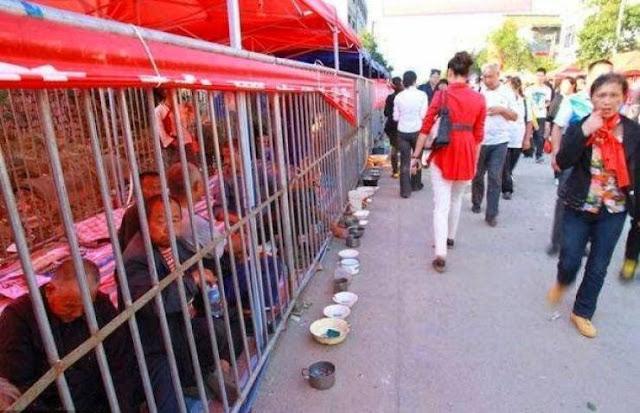 بالصور.. لن تصدق لماذا يحبسوا هؤلاء داخل الأقفاص في كل شوارع الصين؟!