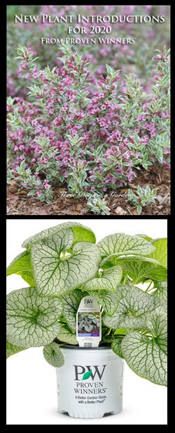 New Plant Introductions for 2020 from Proven Winners®