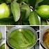 Guava Leaves For Preventing And Smoothing Wrinkles