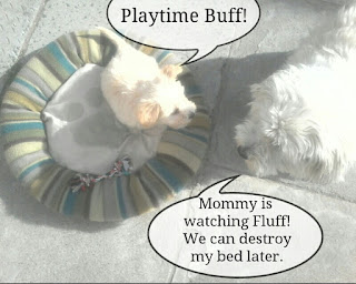 Buffy and Fluffy playing