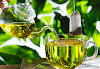 Green Tea – Benefits, Uses, and Side Effects – 12 Things You Need to Know-Fitgut