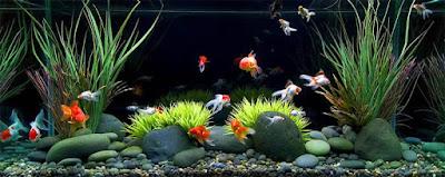 Bisnis Aquarium Dan Ikan Hias Yang Menguntungkan Anda