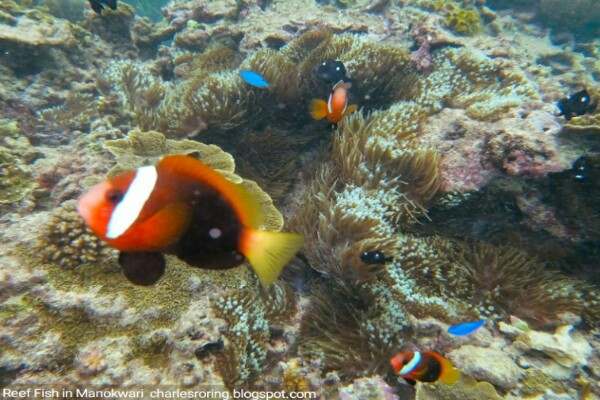 Picture of reef fish