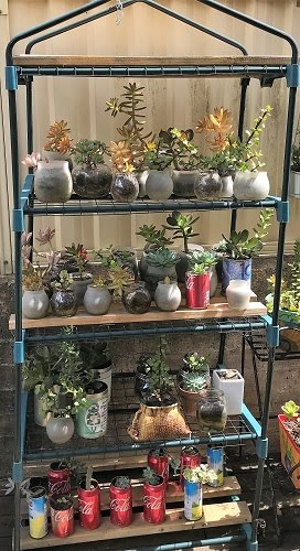 Shelved Succulents