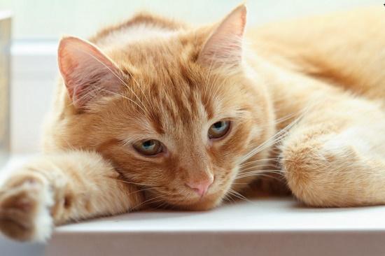 Cara Mengatasi Kucing Sembelit Paling Mudah