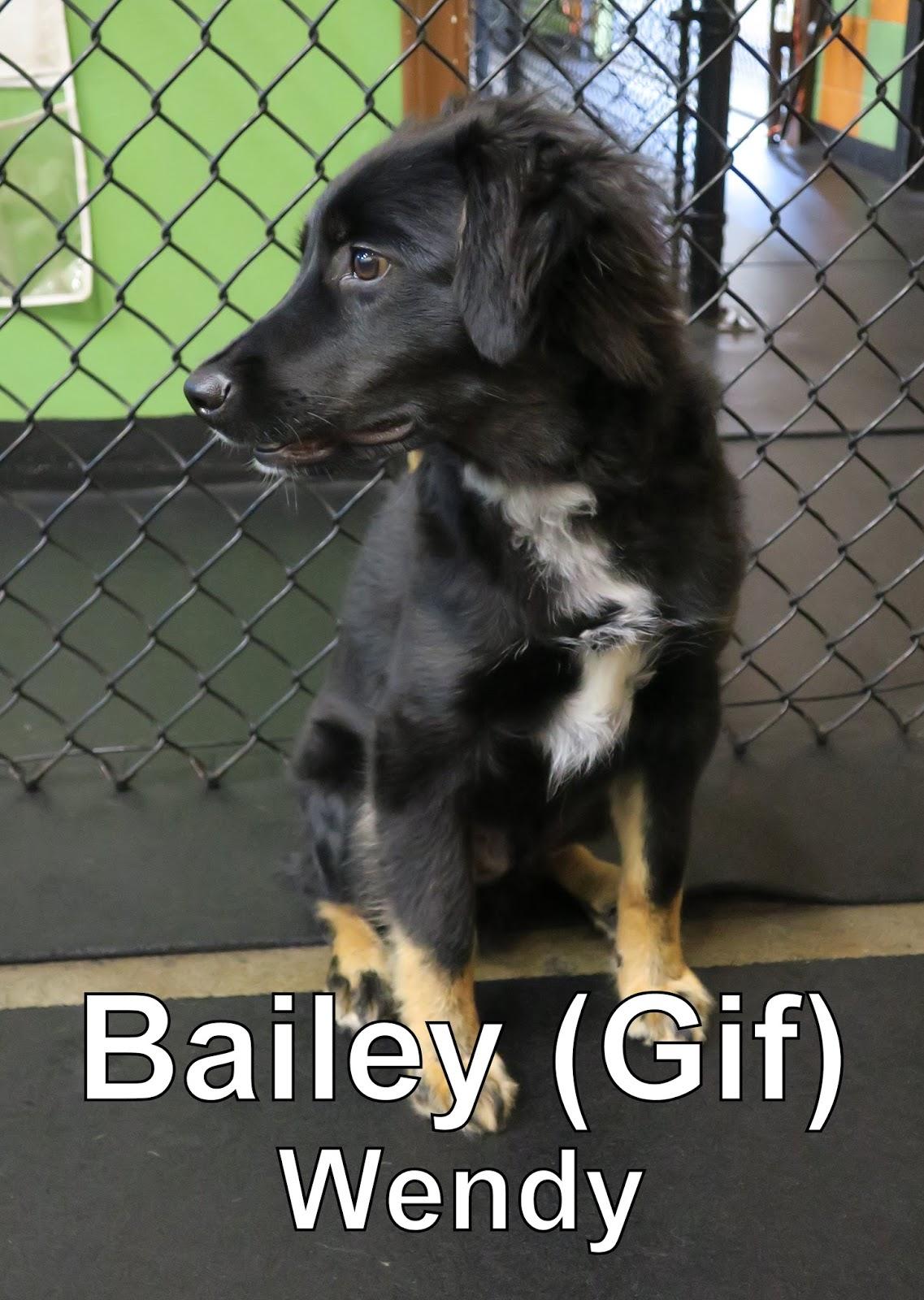 fort fido dog daycare boarding news blog bailey. Black Bedroom Furniture Sets. Home Design Ideas