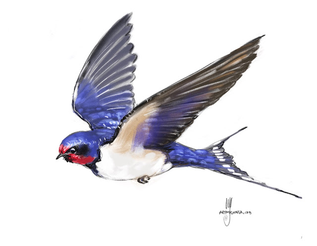 Barn Swallow bird painting by Ulf Artmagenta